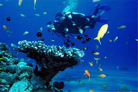 浮潜与潜水