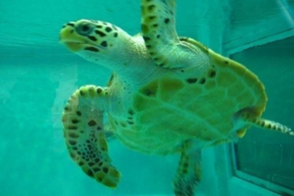 海龟馆旅游图片