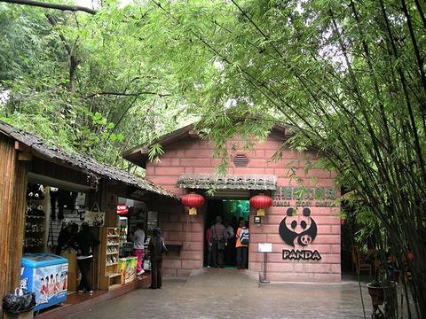 大熊猫魅力剧场