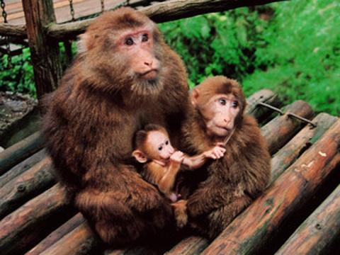 峨眉山生态猴区旅游景点图片
