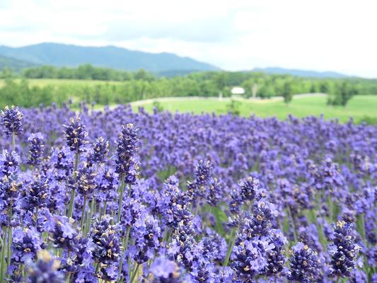 浦臼町旅游景点图片