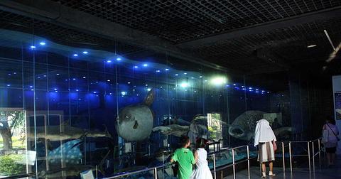 小梅沙鲸鲨馆