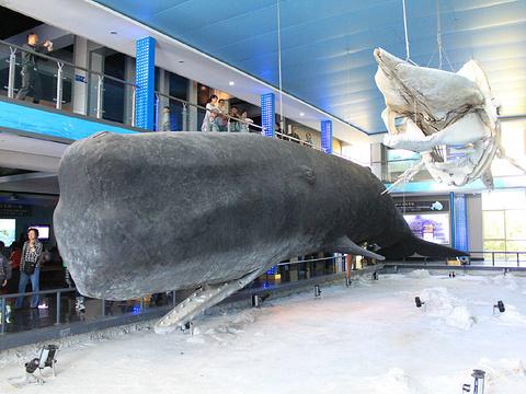 刘公岛鲸馆旅游景点图片