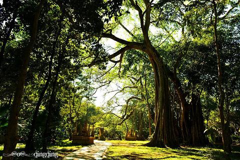 独树成林的图片