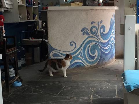Anne猫窝咖啡屋旅游景点图片
