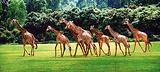 长颈鹿广场