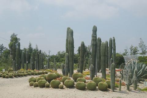 沙生植物区