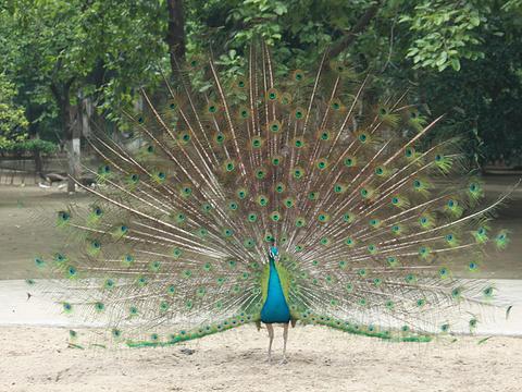 红山森林动物园旅游景点图片