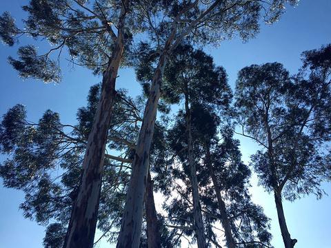 昆明植物园旅游景点图片