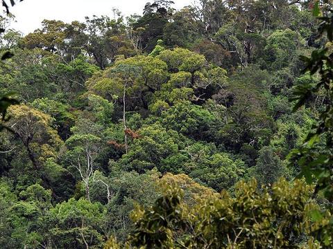 佳西自然保护区旅游景点图片