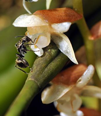 佳西自然保护区旅游图片