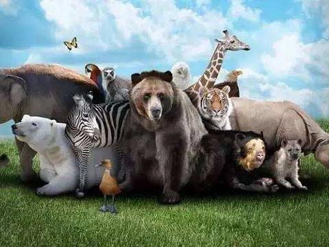 宿州野生动物园旅游景点图片