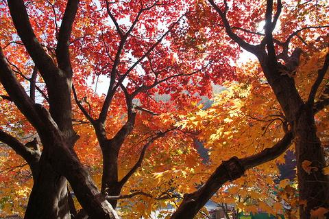 东豆川市旅游景点图片
