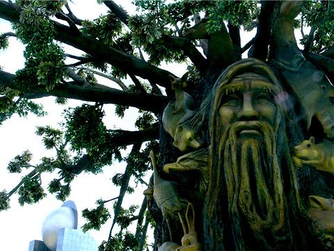 神秘古树旅游景点图片
