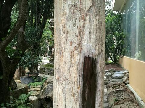 勐巴娜西大花园旅游景点图片