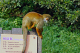 松鼠猴生态园