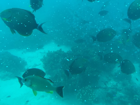 美人鱼号观光潜水艇旅游景点图片