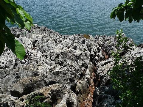 太湖石群落景区旅游景点图片