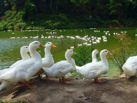 八宝塘旅游景点图片