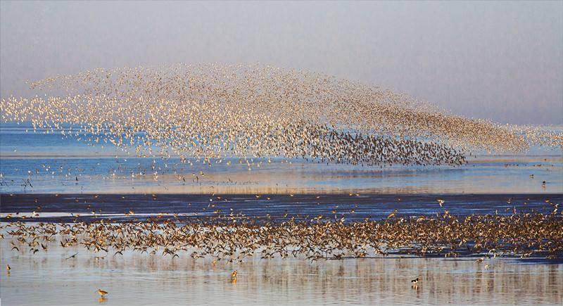 鸭绿江口国际湿地观鸟节