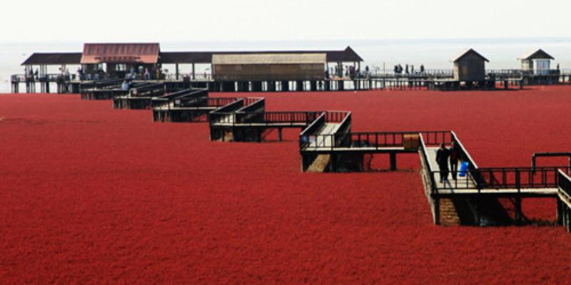 盘锦红海滩观赏会