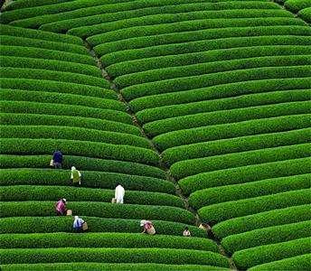 中国溧阳茶叶节