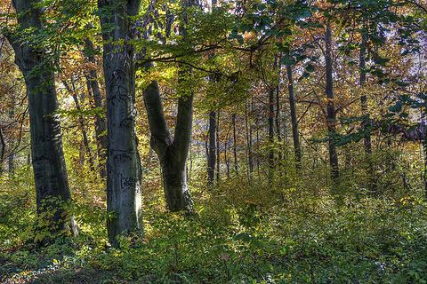 格德勒树木园