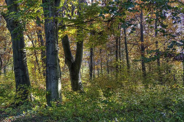格德勒树木园旅游图片