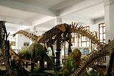 北碚恐龙遗址