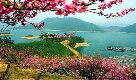 桂花岛(猴岛)的图片