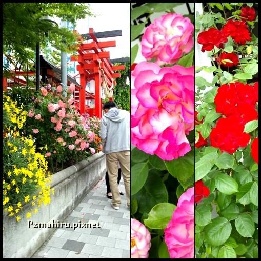 福山玫瑰祭