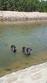 天鹅湖亲海游乐园