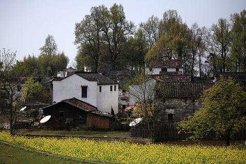 阆山村的图片