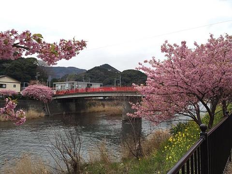 伊豆旅游景点图片