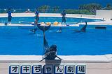 海洋博公园海豚表演剧场
