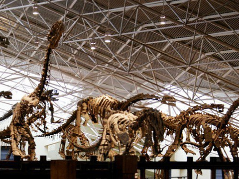 世界恐龙谷旅游区旅游景点图片