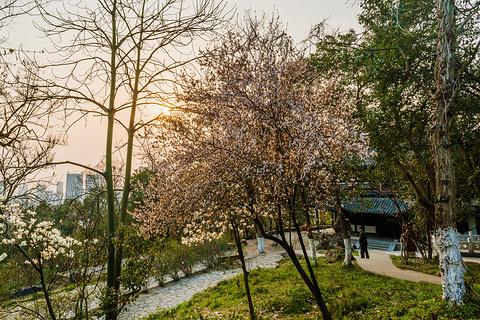 赭山公园的图片