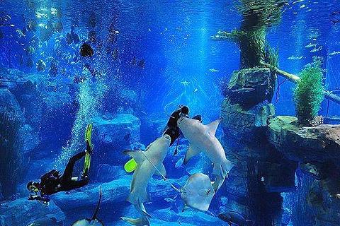 新加坡虎豹海洋游乐园成都海洋馆