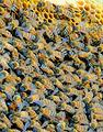 清境养蜂场