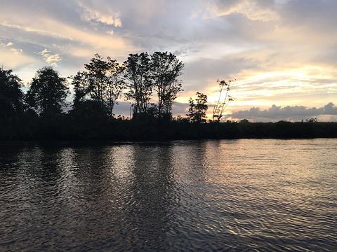 克里亚斯红树林旅游景点图片