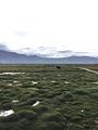阿拉尔国家湿地公园