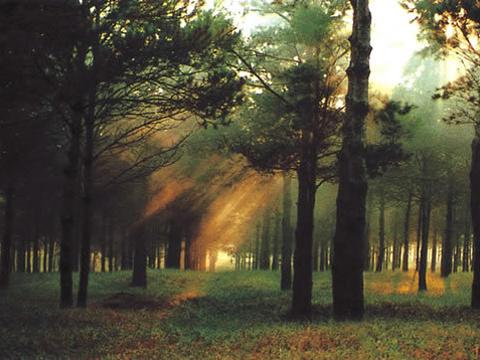 章古台沙地森林公园旅游景点图片