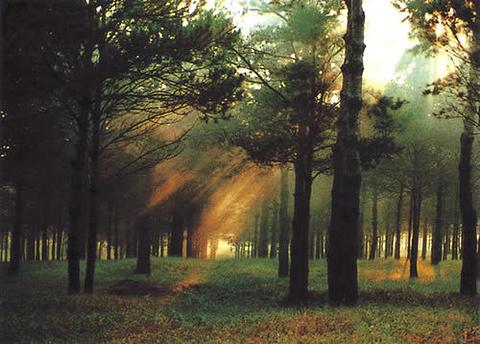 章古台沙地森林公园的图片