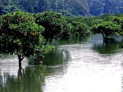 山口红树林旅游景点图片