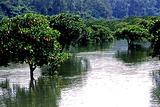 山口红树林