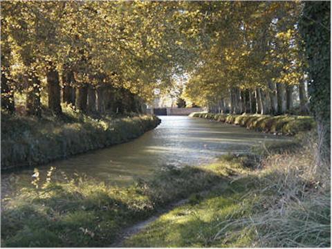南运河的图片