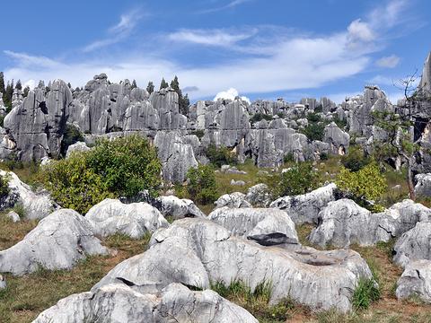 石林喀斯特地质博物馆旅游景点图片