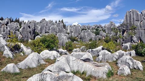 石林喀斯特地质博物馆的图片
