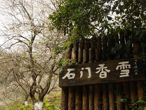 石门国家森林公园赏花旅游景点图片