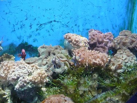 皇后镇海底世界旅游景点图片